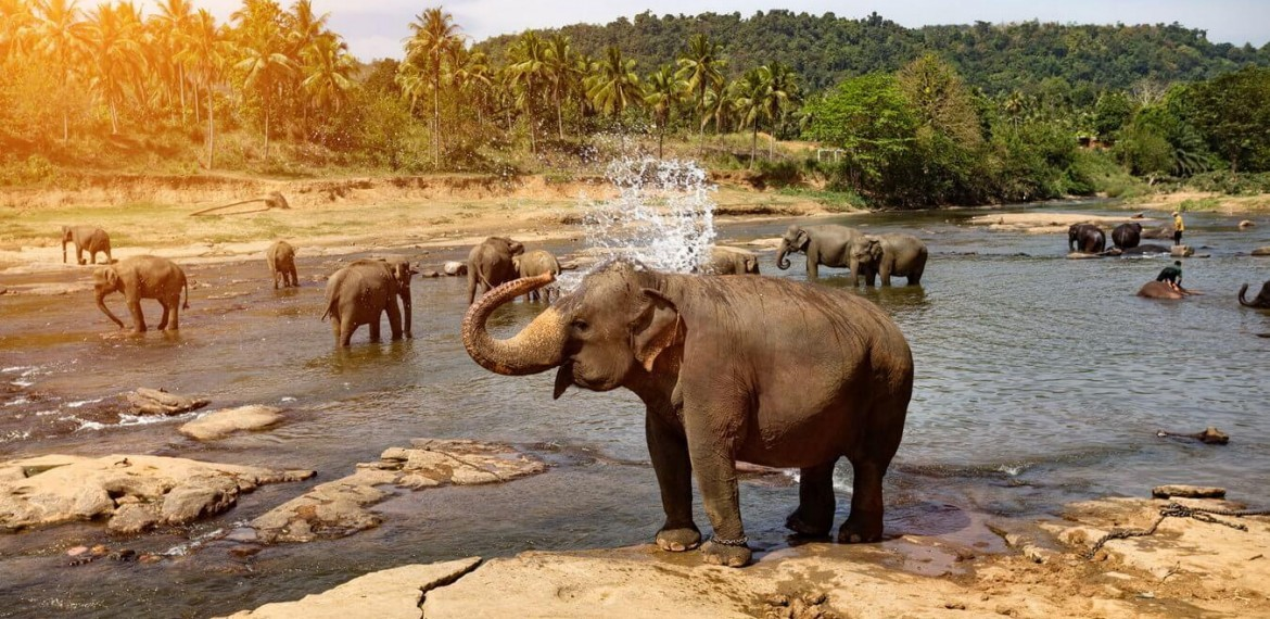 We Reviewed Elephant's Life